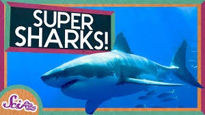 SciShow Kids - SUPER SHARKS